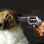 Animali maltrattati con ASG alla festa cittadina