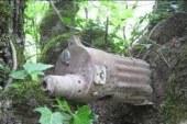 """La guerra """"metabolizzata"""" dagli alberi di Leningrado"""