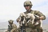 Un torneo di soft air per sostenere le adozioni di cani
