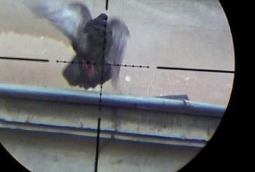 Spara ai piccioni dal finestrino… usando un'ASG?