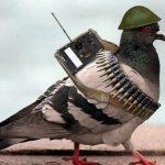 """Soft air """"contraereo"""": quando l'avversario è un piccione"""